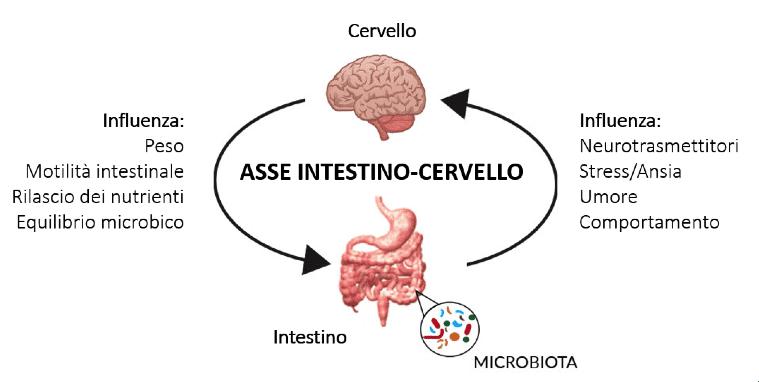 Le vie di comunicazione dell'asse microbioma-intestino-cervello