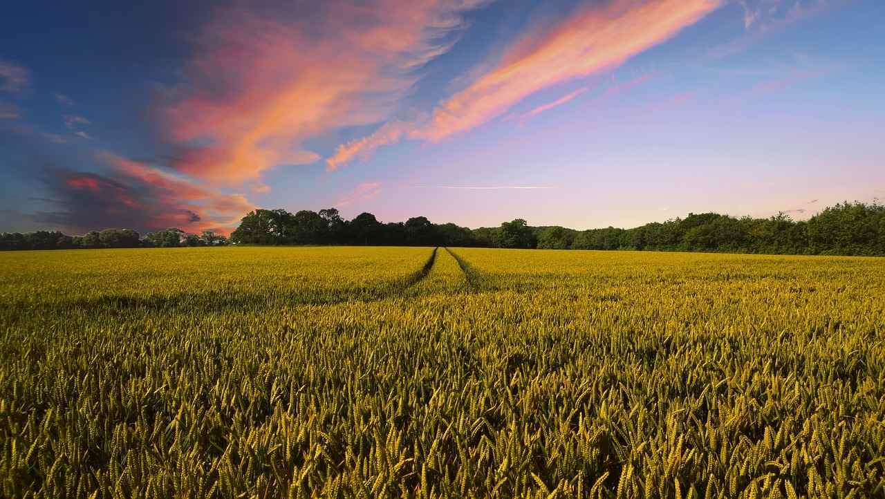 Un Lavoro da Biologo: Consulente Tecnico Commerciale in agricoltura