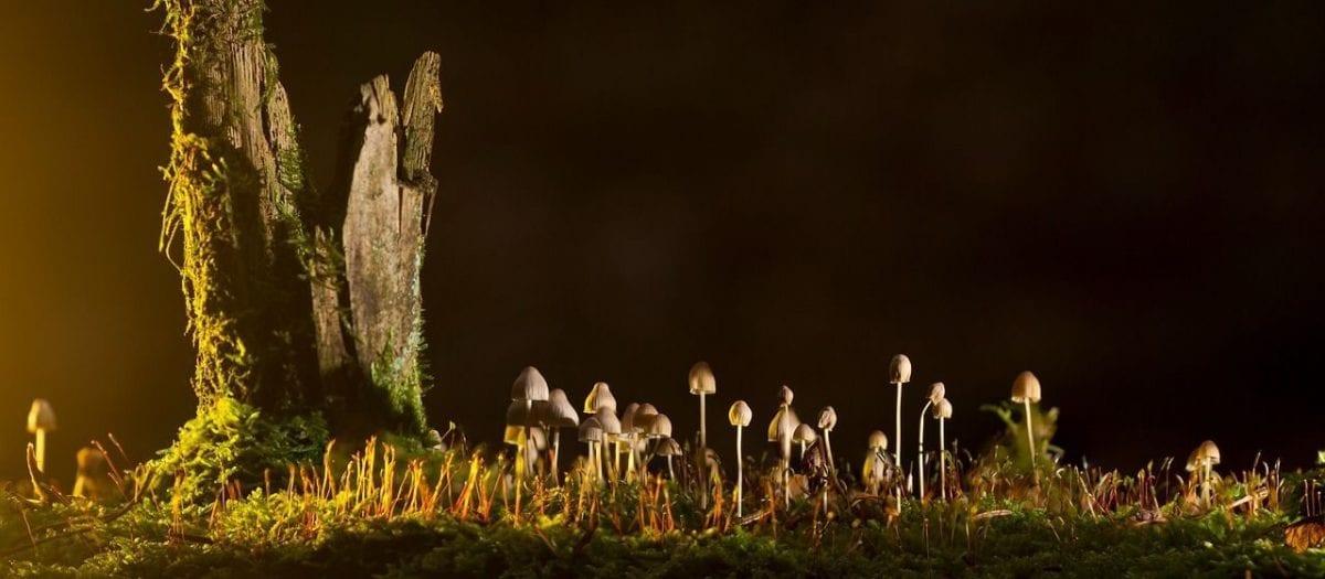 Il Regno dei funghi