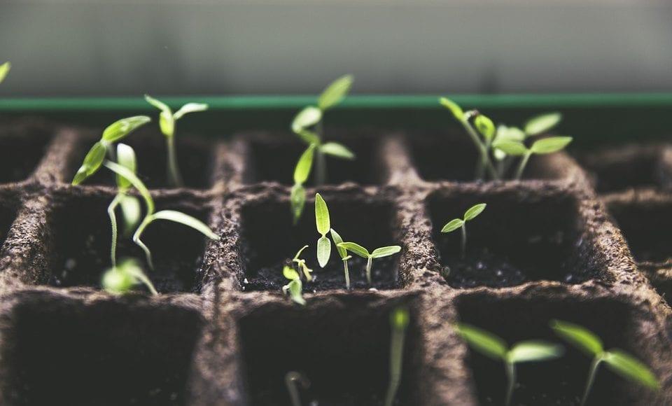 Un Lavoro da Biologo: il Plant Breeder
