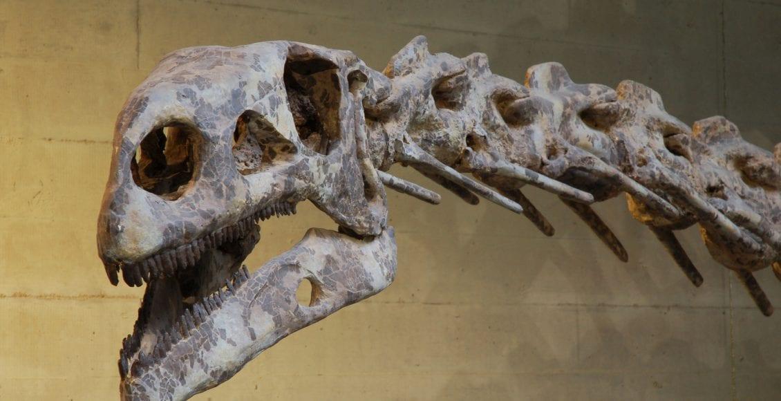 Il Plateosauro: il dinosauro vegetariano