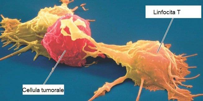 immunoterapia linfocita T