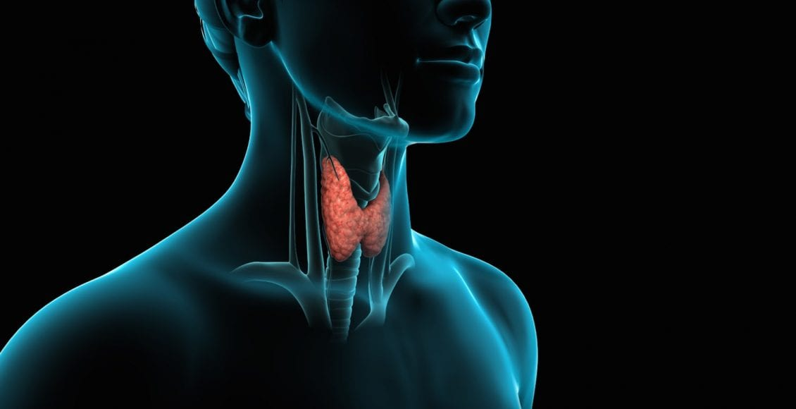 Tiroidite di Hashimoto: il sistema immunitario attacca la tiroide