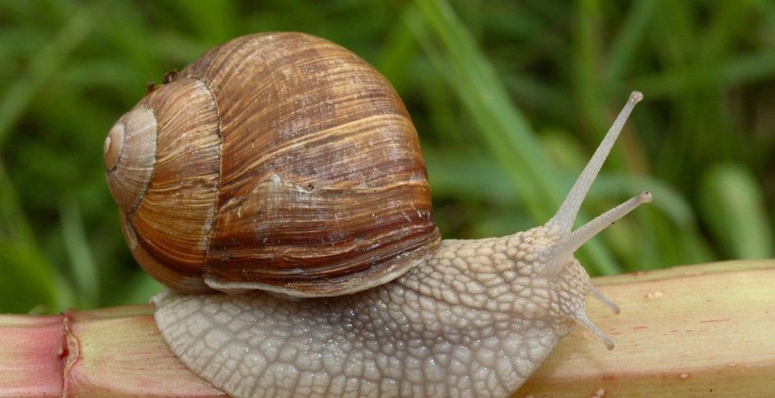 i Gasteropodi, i molluschi che hanno ''sfondato''