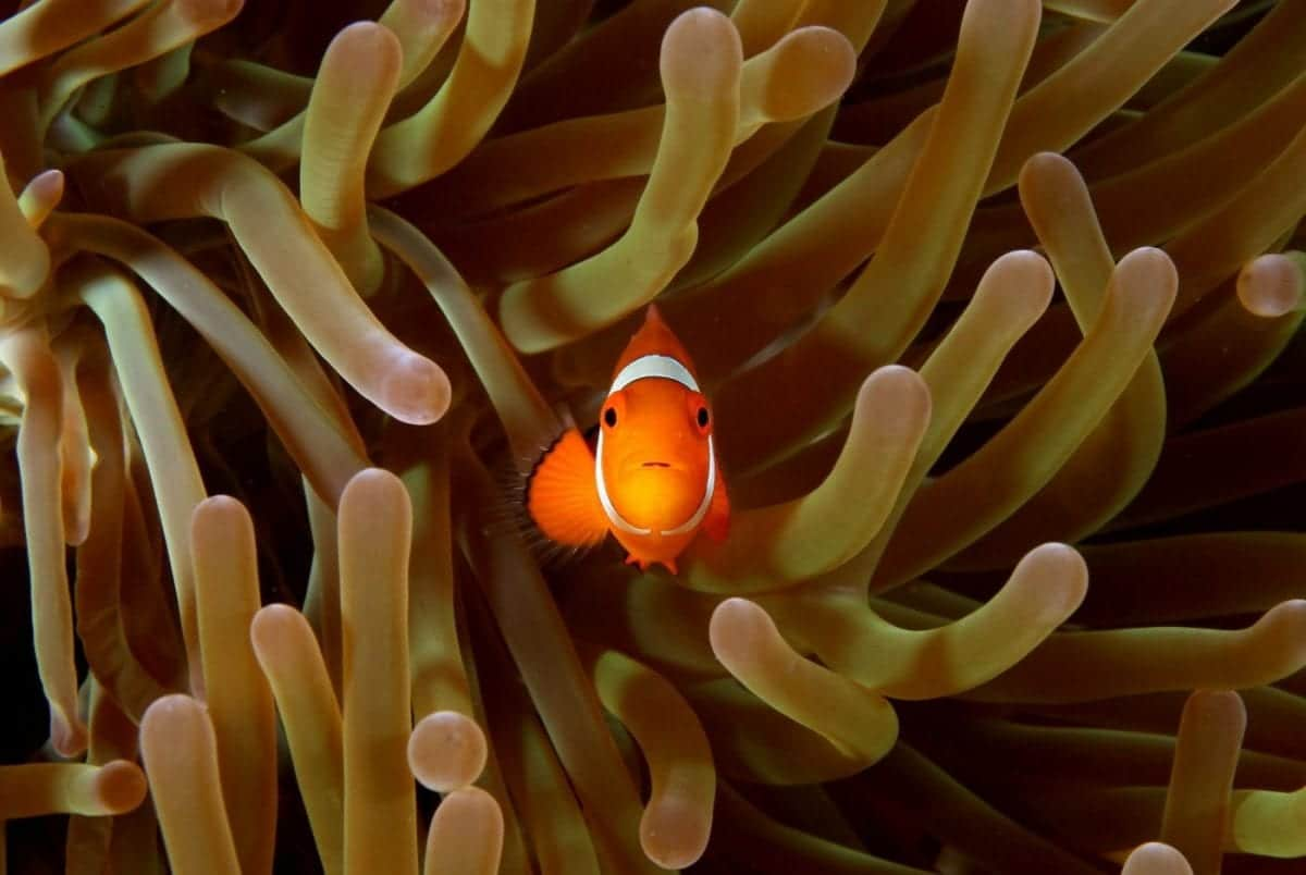 Simbiosi: una stretta relazione fra esseri viventi