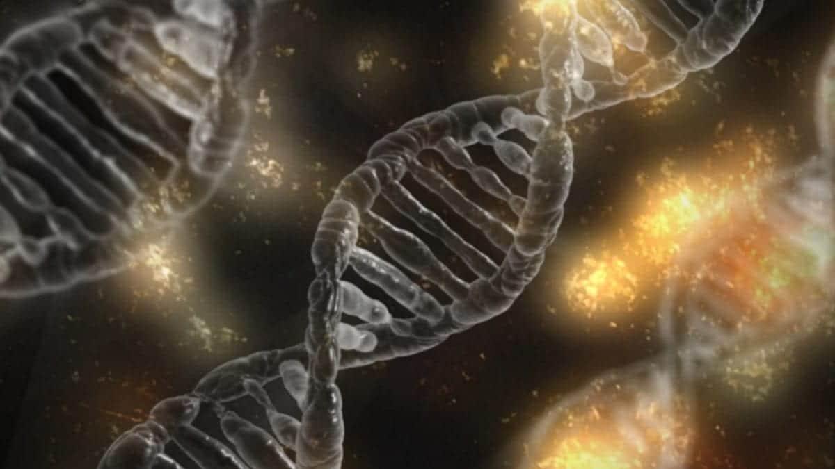 la trascrizione negli eucarioti