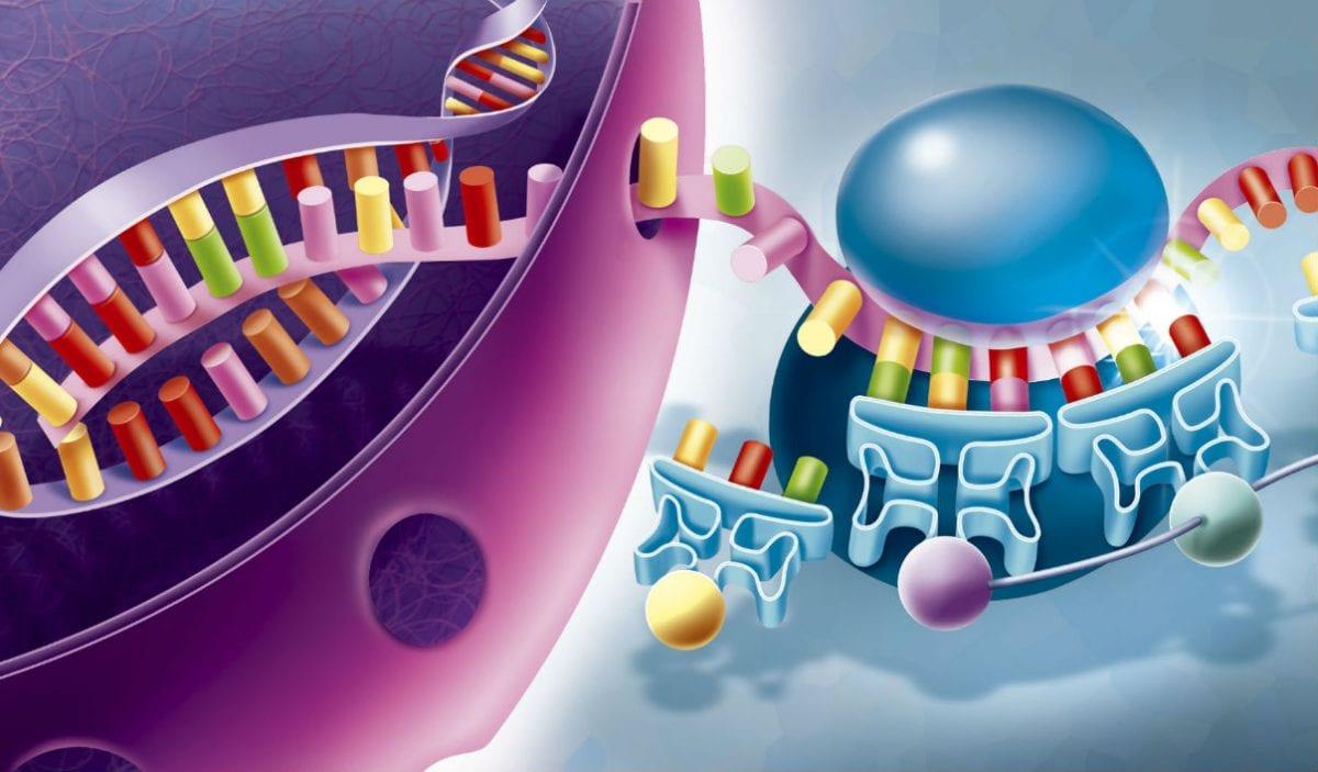 la sintesi proteica (traduzione)
