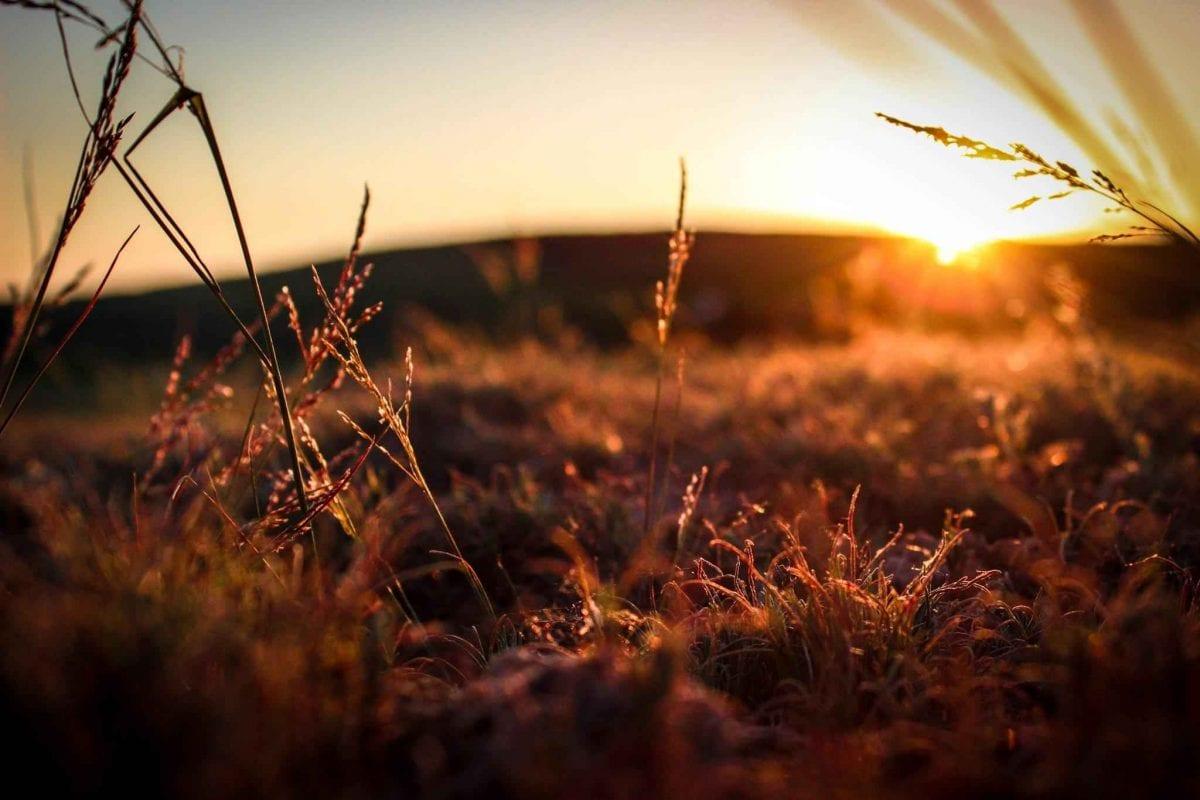 Cos'è l'agricoltura biodinamica?