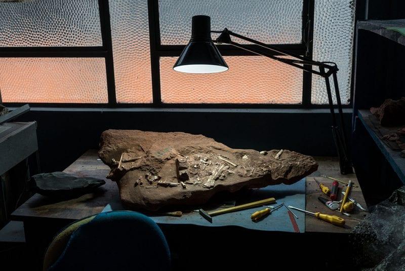 Pterosauri creature volanti di Aaronne Colagrossi