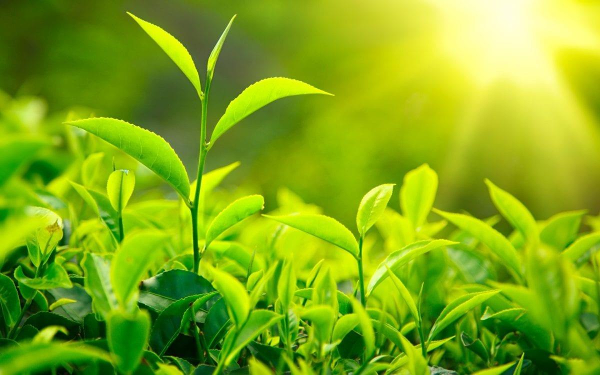 dispersione nelle popolazioni vegetali