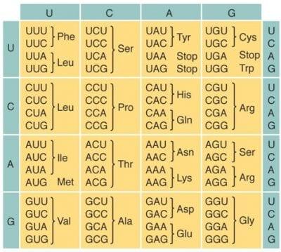 Schema del codice genetico.