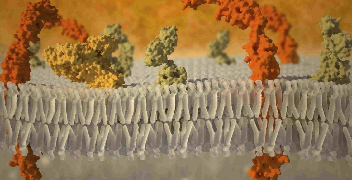 trasporto attraverso la membrana plasmatica