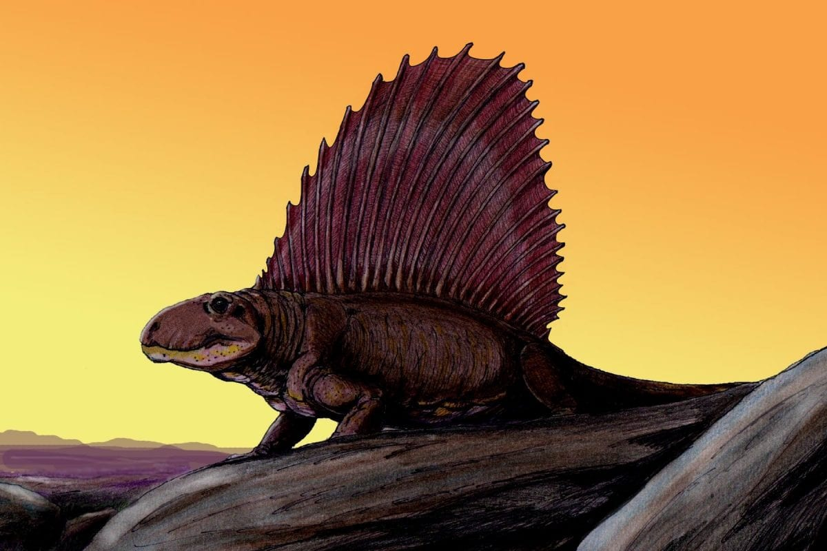 "Dimetrodon e la sua ""vela dorsale"""