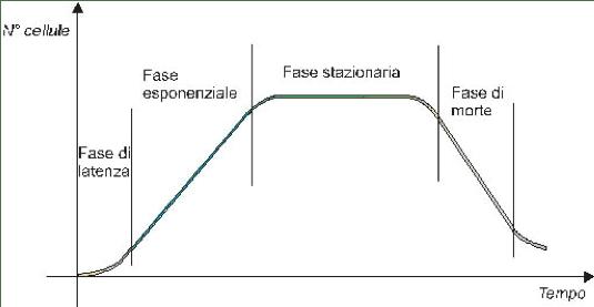 Curva di crescita di una coltura cellulare primaria