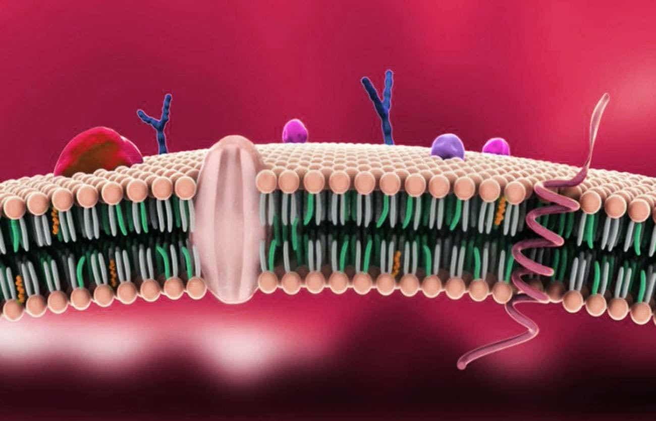 ricostruzione della Membrana plasmatica