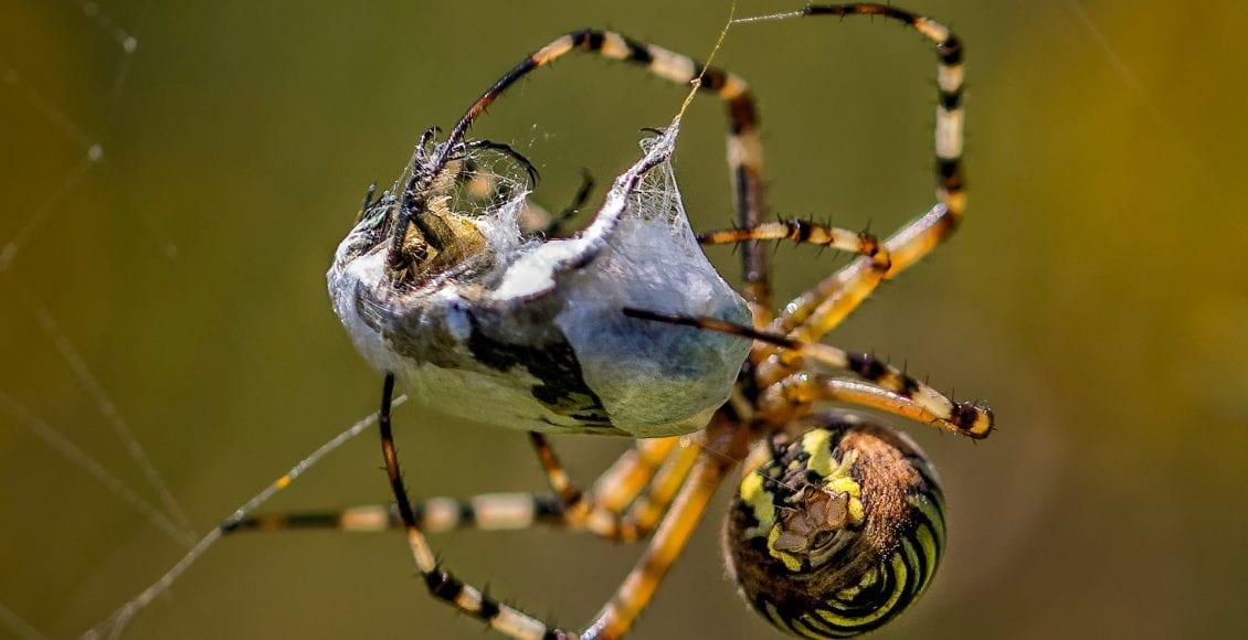 la seta del ragno
