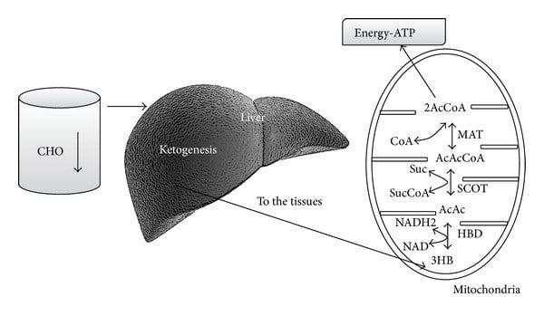 dieta chetogenica e corpi chetonici