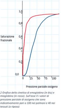 Grafico della cinetica di emoglobina e mioglobina su assi cartesiani