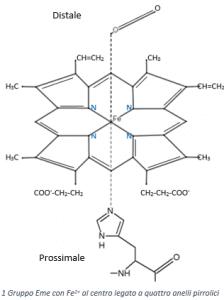 Schema della struttura chimica del gruppo Eme