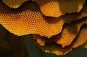 Tipico alveare di un ape