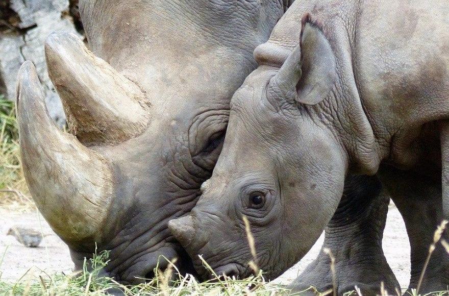 estinzione dei mammiferi