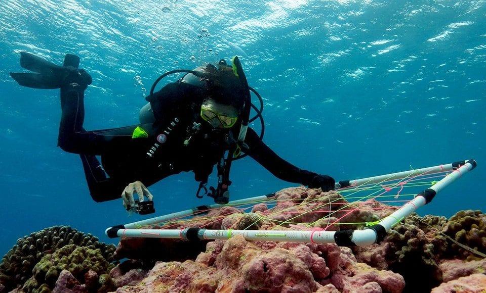 Ecologo marino