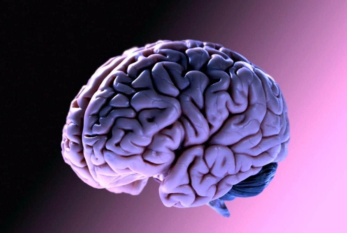 studiare il cervello