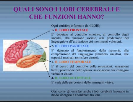 Quali sono i lobi cerebrali e che funzioni hanno?