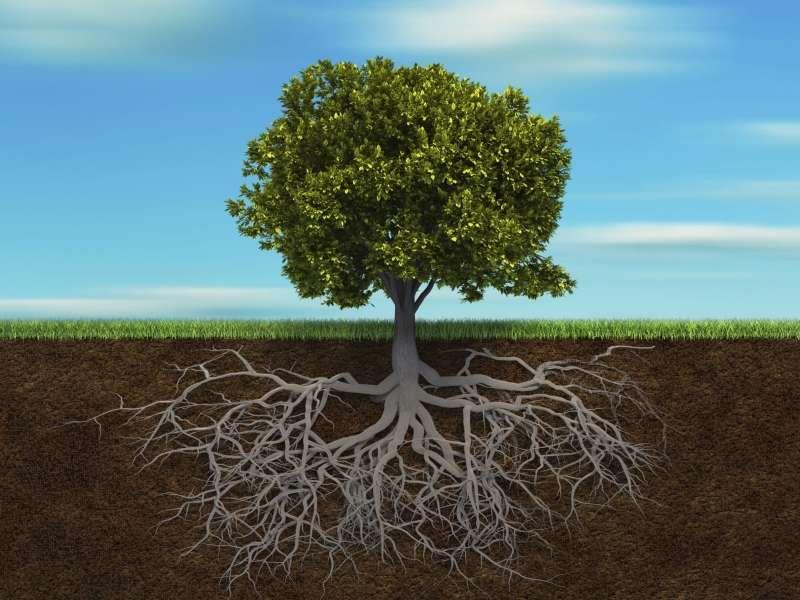 comportamenti emergenti nelle piante