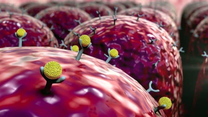 recettori cellulari dell'immunità innata