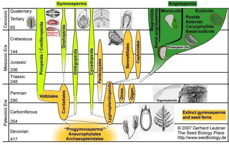 sistematica delle spermatofite