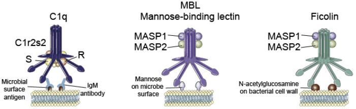 molecole solubili dell'immunità innata