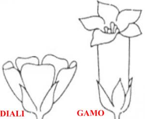 tipologie di petali