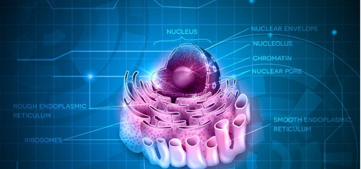 reticolo endoplasmatico