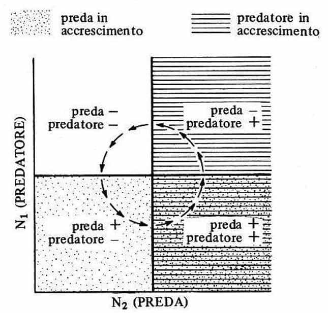 predazione: abbinamento delle isocline zero per la preda e il predatore