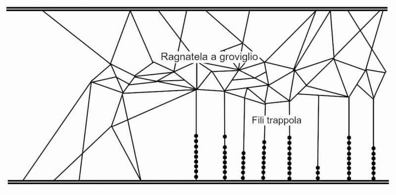 Schema di una ragnatela a groviglio della falsa vedova nera