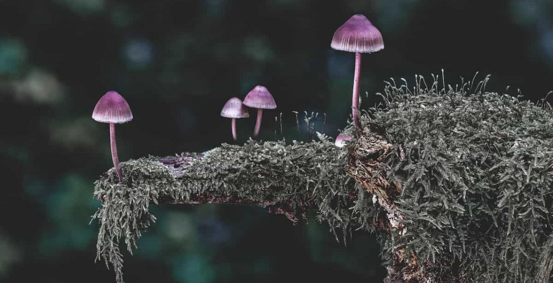 curiosità sui funghi