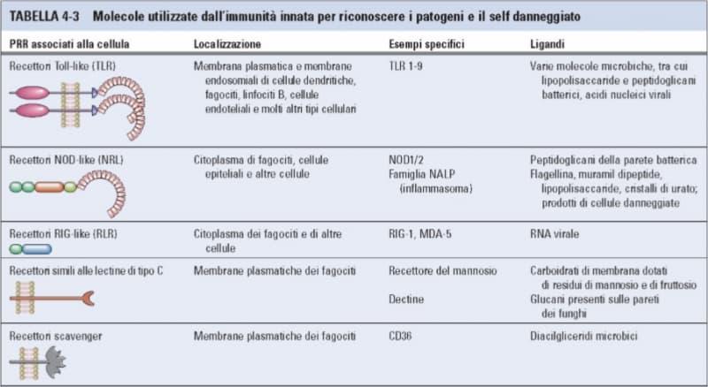 molecole per riconoscere patogeni