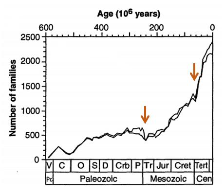 Numero di famiglie di organismi viventi nel corso del tempo