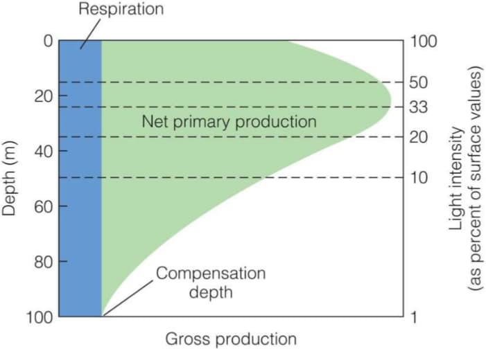Variazione della produttività primaria in ambiente terrestre