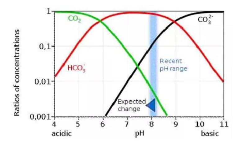 ciclo carbonio e ph