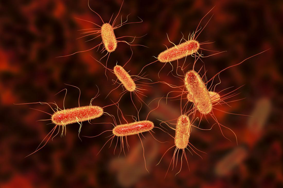 contaminazione batterica