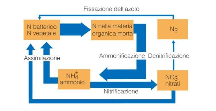 fissazione dell'azoto
