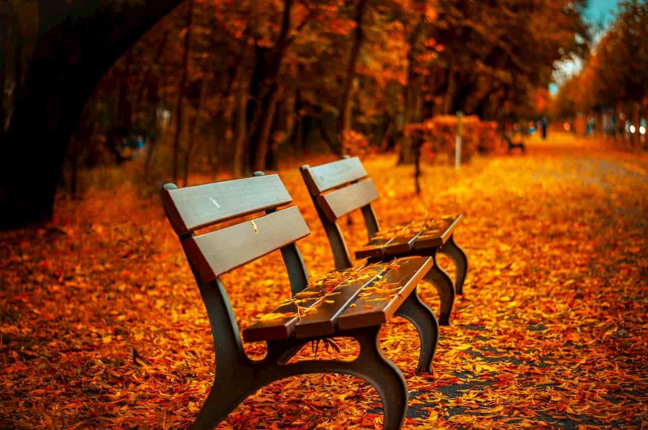 caduta foglie in autunno