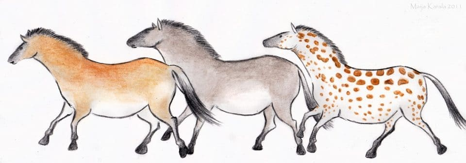 cavalli selvatici dell'era glaciale