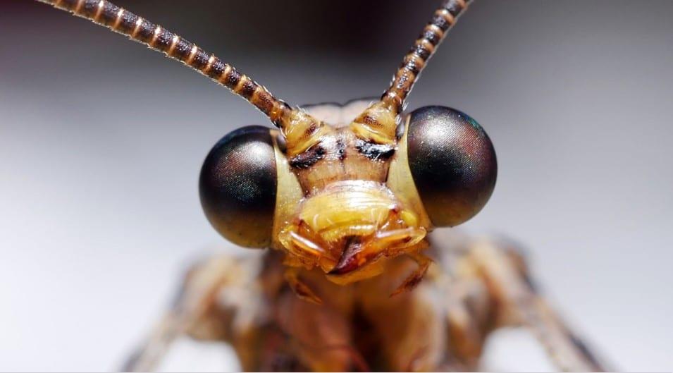 capo degli insetti
