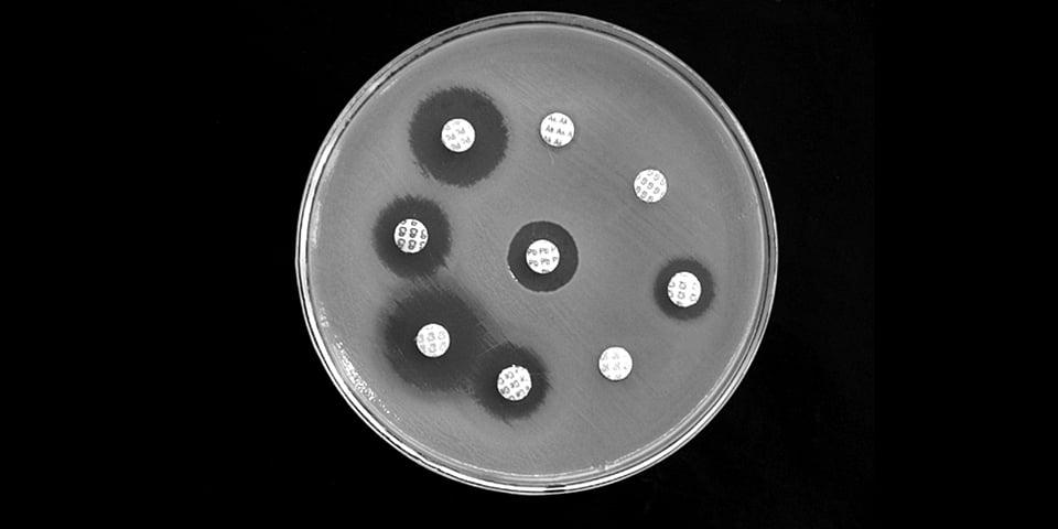 antibiotico resistenza in Piastra Petri