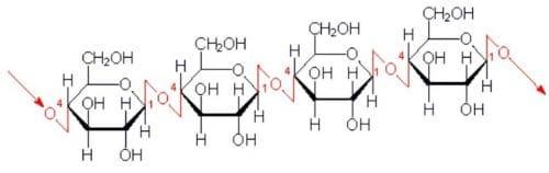 Struttura della Cellulosa