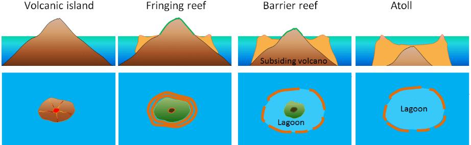 Formazione di un Atoll Reef