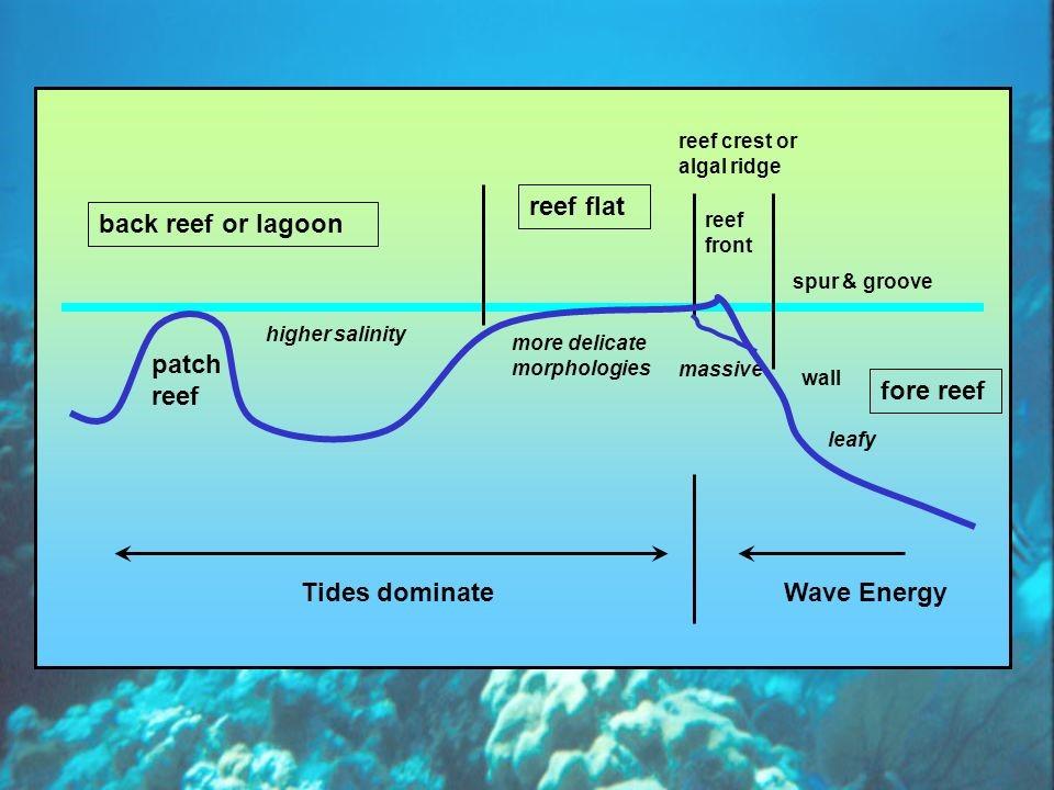 La zonazione del reef